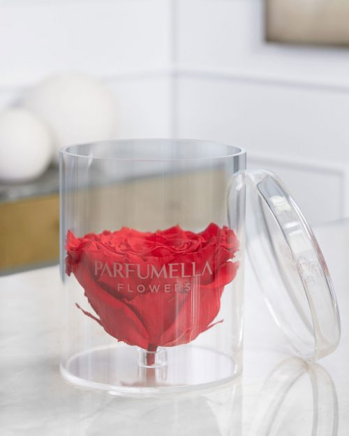 Eternal Red Rose on Cylinder Acrylic