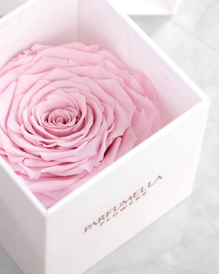 Eternal Pink Rose on White Acrylic