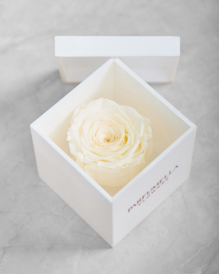 White Beauty on Acrylic Box