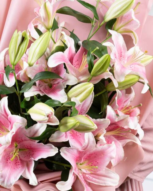 Pink Lily Show