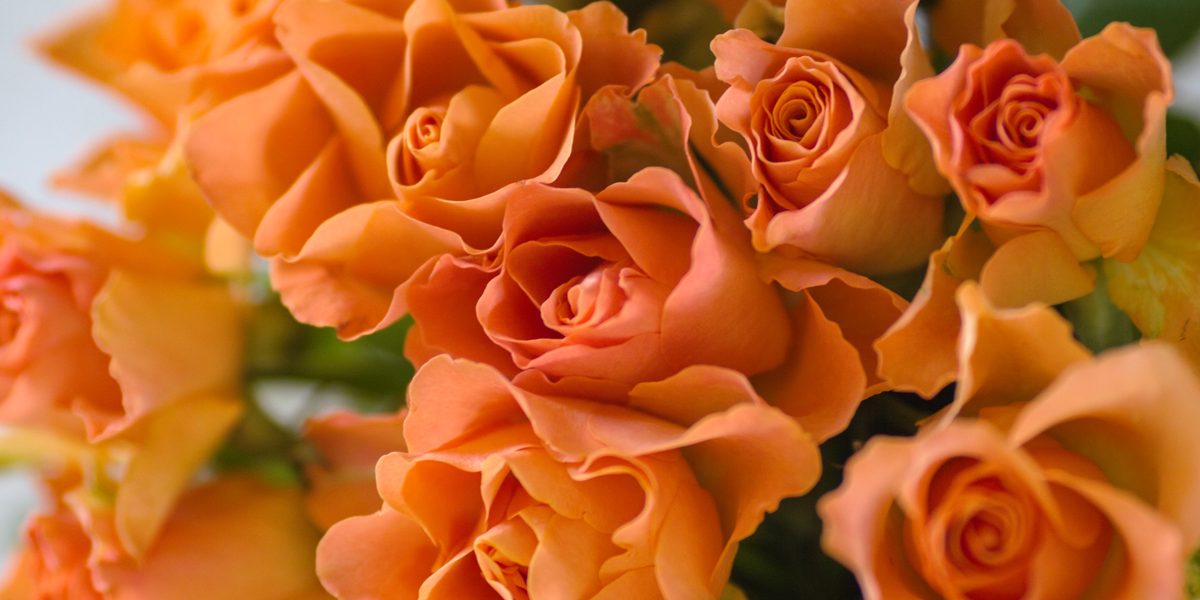 Know Every Flower Color Meanings and Symbolisms