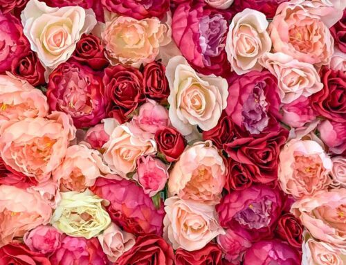 The Meaning Behind Every Rose Color